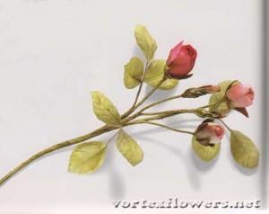 бутоны-конфетки для розы