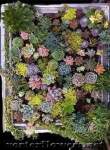 живые картины из растений