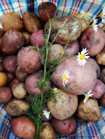 Картофель: полезные свойства и немного истории