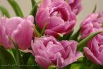 Весенние цветы и яркое настроение весь год!