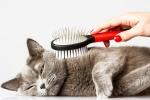 Как ухаживать за кошкой – советы от зоомагазина в Воронеже