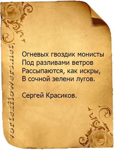 стихи о гвоздике