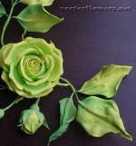 Способ скручивания лепестков и листьев из фоамирана через эластичную ткань. Как сделать изящные листья из фома без молдов