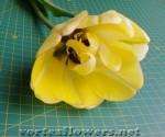 Строение очень необычного тюльпана