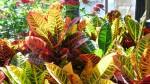 Влияние комнатных растений на восприятие интерьера помещений