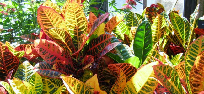 rp_bring-oxygen-and-beauty-into-your-home-or-office-by-growing-happy-houseplants.jpg