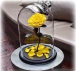 Неувядающие цветы существуют не только в сказках!