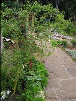 Необычные ивы для украшения сада – Хакуро-нишики и Матсудана Тортуоза